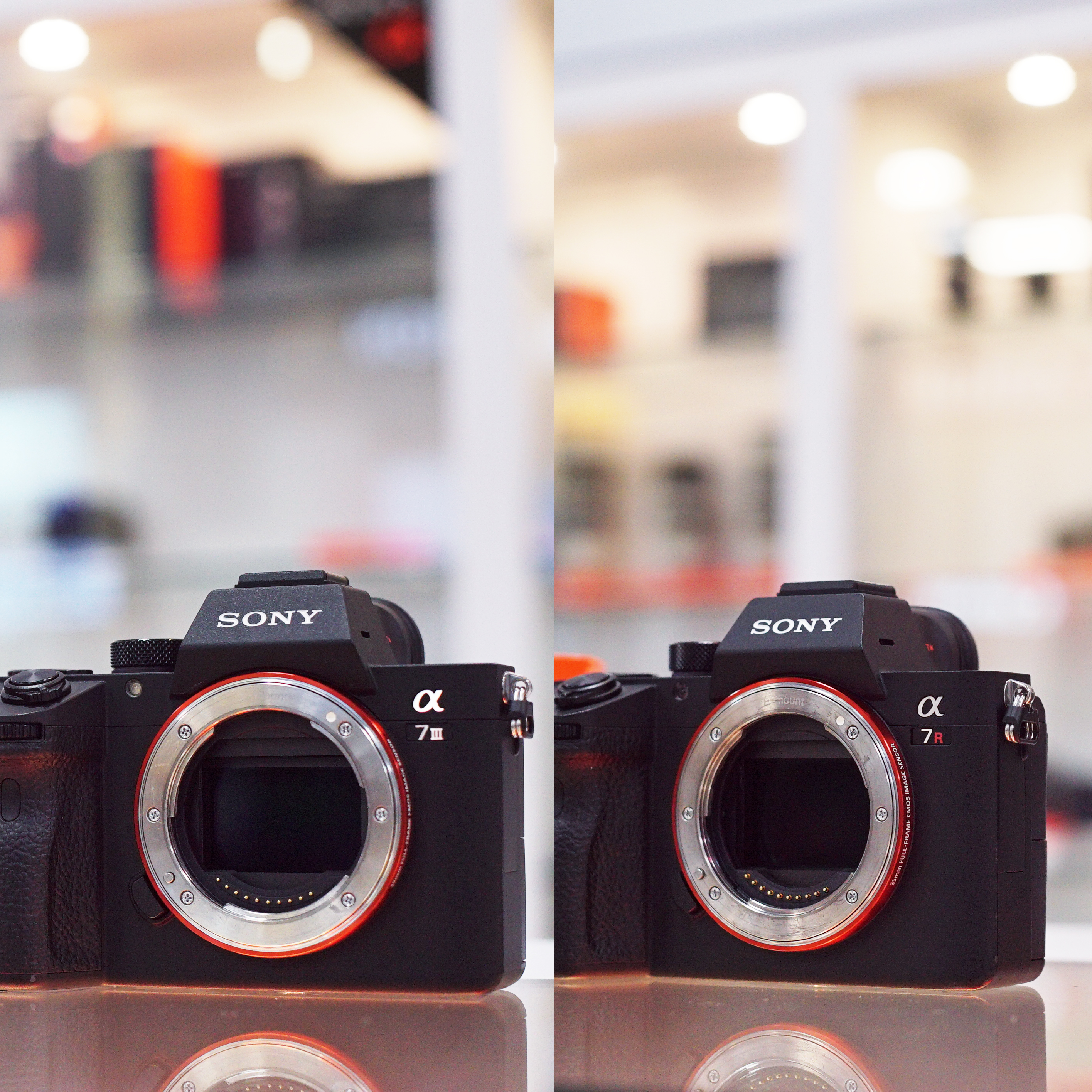 Sony A7III vs Sony A7RIII Which one is for you?