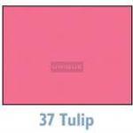 Savage Background 53x36 Tulip