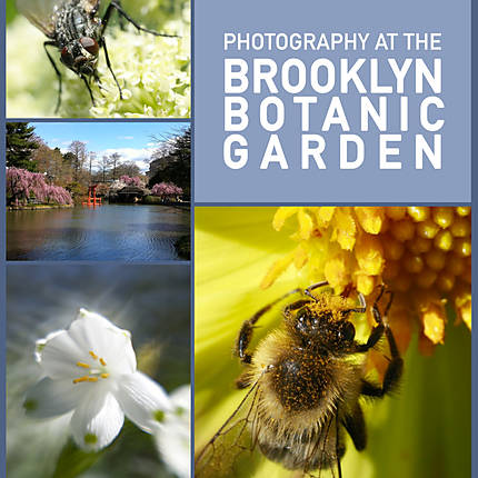 Photography at the Brooklyn Botanic Garden
