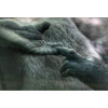 Photowalk at the Bronx Zoo with Michael Downey